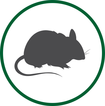 Dynamic Sanito Singapore - Rats